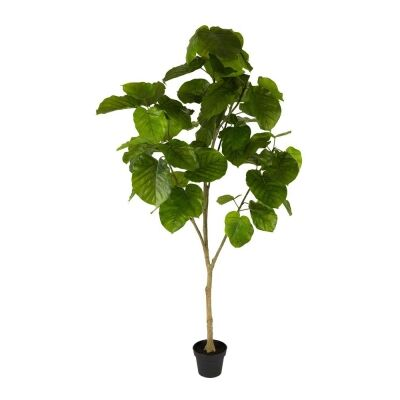 Real Touch Artificial Ficus Umbellata in Pot, 200cm