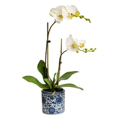 Dynasty Artificial Phalaenopsis Orchid in Pot, 30x55cm, Apple Green Flower