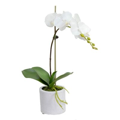 Kacie Artificial Phalaenopsis Orchid in Pot, 48cm, White Flower