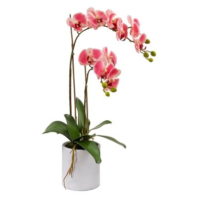 Kacie Artificial Phalaenopsis Orchid in Pot, 60cm, Pink Flower