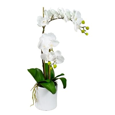 Kacie Artificial Phalaenopsis Orchid in Pot, 60cm, White Flower