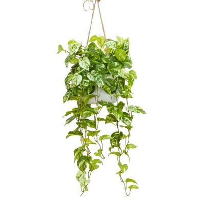 Glamorous Fusion Artificial Marble Pothos in Hanging Pot, 110cm
