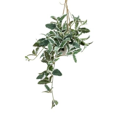 Glamorous Fusion Artificial Tricolor Sage in Hanging Pot, 86cm